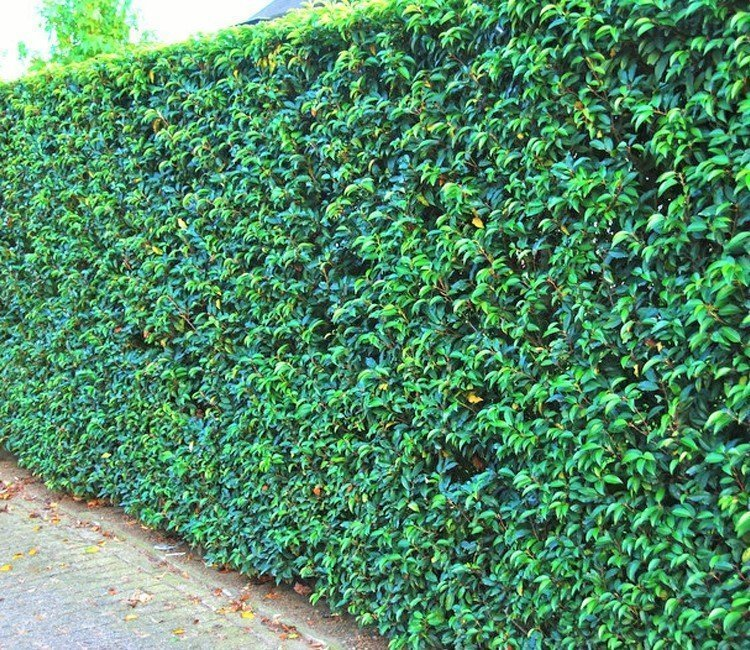 grüner Garten